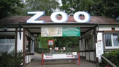 Warum wir Zoos abschaffen sollten