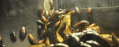 Insekten als Mitbewohner und was man dagegen tun kann