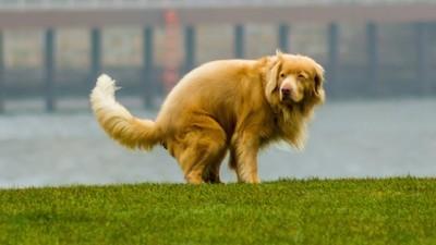 Heulsuse der Woche: Hundehaufen-Schlägerinnen vs. Pfefferspray-Mutti
