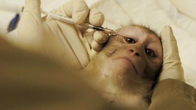Im Affenlabor: Tierversuche an Primaten