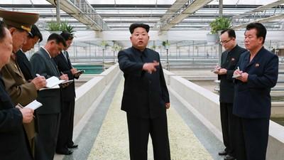 "Kim Jong-un hat einen Schildkrötenfarmer wegen ""Inkompetenz"" hinrichten lassen"
