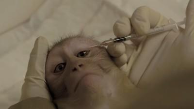 Experimentación con animales: monos de laboratorio
