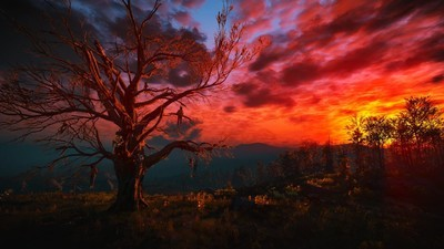 Wild Open Spaces: A Visual Guide to the World of 'The Witcher 3'