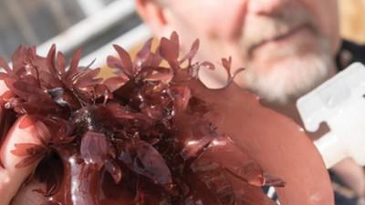 Wissenschaftler haben eine natürliche Quelle für veganen Speck entdeckt