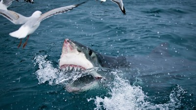 We Asked an Expert Why Shark Attacks Are on the Rise