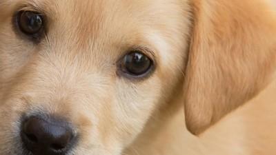Zapytałam neurologa, dlaczego widząc słodkie zwierzątka, zawsze pragnę je zgnieść