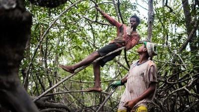 Viețile periculoase ale culegătorilor de scoici din mangrove