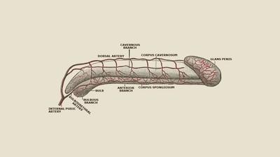 Cum arată un penis frumos, conform ştiinţei