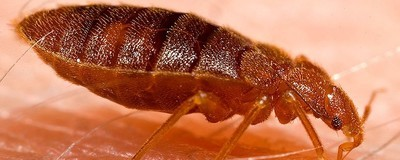 I Spent Months Battling Bedbugs and Years Trying to Get Them Out of My Head