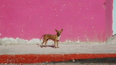 In Mexico, Small-Time Crooks Are Kidnapping People's Pets