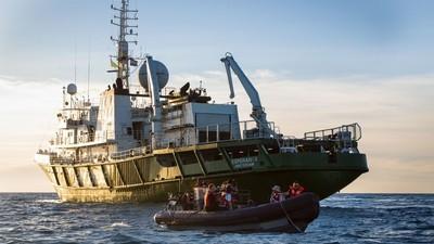 Distrito Feral: La vaquita marina confronta su extinción