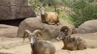 De landschappen in dierentuinen