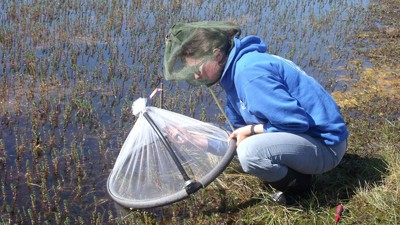 Why Giant Mosquitoes Are Suddenly Swarming Greenland