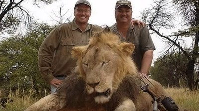 Why Do Hunters Think It's Cool to Kill Lions?