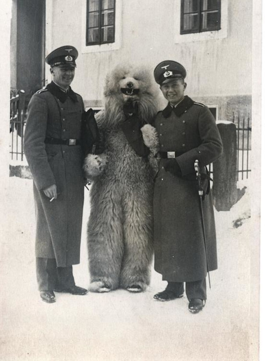 Bizarre Vintage Photos of Americans in Blackface and Nazis Posing with Men in Polar Bear Costumes