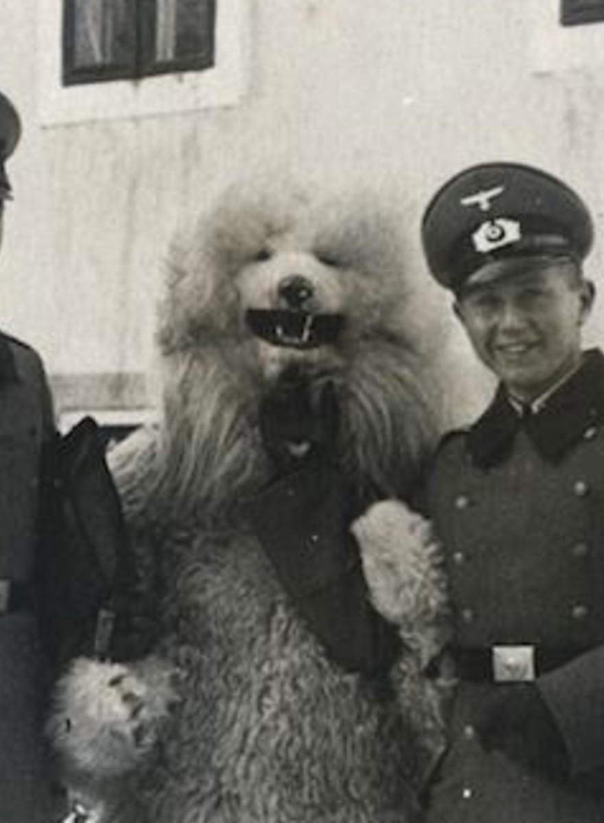 Foto's van nazi's die poseren met mannen in ijsbeerpakken