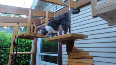 Could 'Catios,' a.k.a. 'Cat Patios' Prevent Cats from Destroying the Planet?