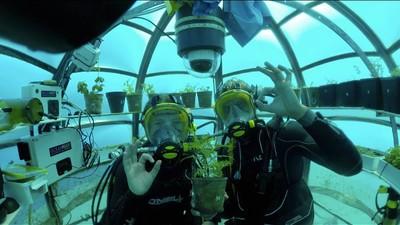 Povestea scafandrilor care cresc recolte subacvatice
