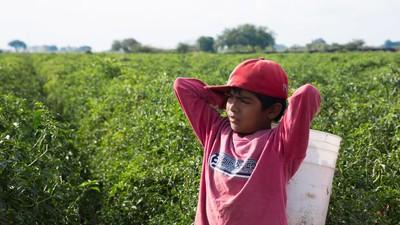 Los jornaleros mexicanos y su trabajo mal pagado
