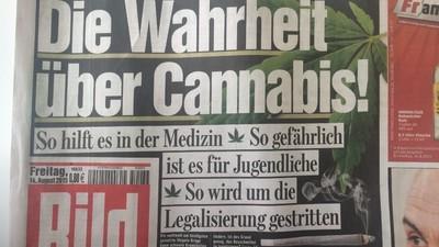 """Sagt die Bild wirklich """"die Wahrheit über Cannabis""""?"""