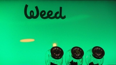 Exploring the Cannabis Clubs of Southern Spain, Europe's New Weed Destination