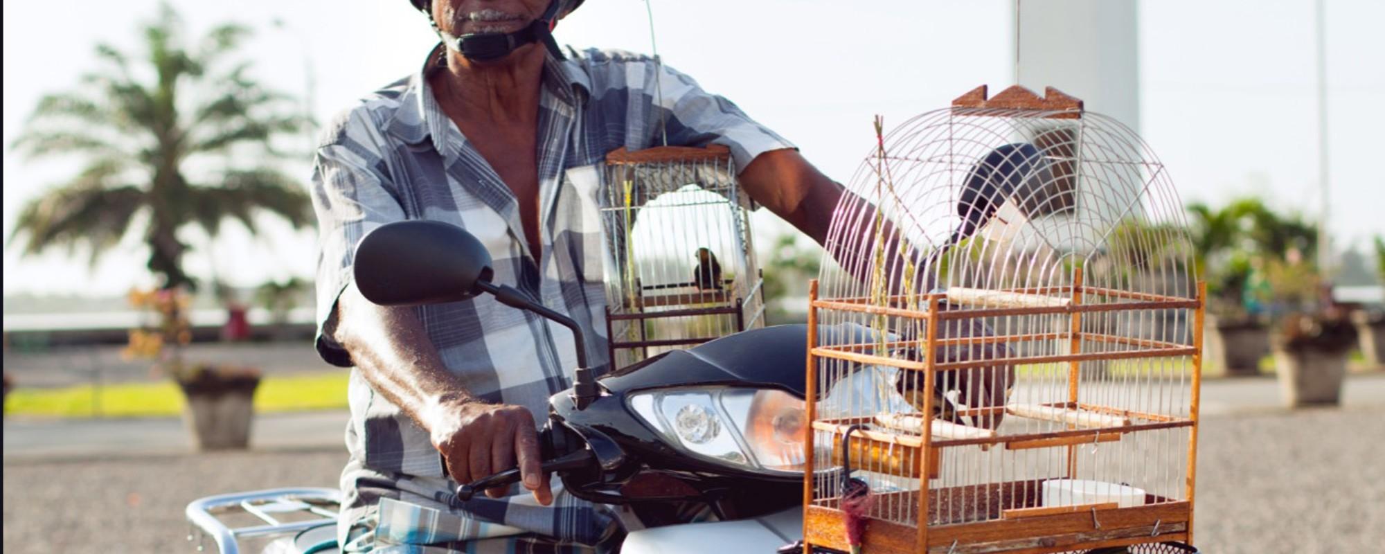 De vogelmannen van Paramaribo