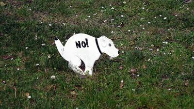 Heulsuse der Woche: Urin-Nazis vs. Hundekot-Vermieter