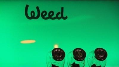 Cluburile de marijuana care au pus Spania pe harta internațională a fumatului