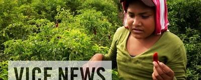 Die Früchte billiger Arbeit in Mexiko