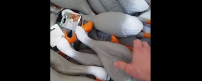 We Talked to the Guy Behind the Horrifying, Wonderful, Viral 'Duck Army' Vine