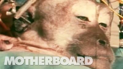 Transplantul unui cap de maimuță - partea 1