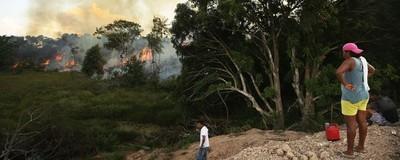 Todos los biomas forestales de la Tierra se están muriendo