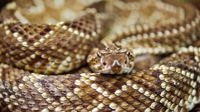 The World Will Run Out of Essential Snake Antivenom by 2016, According to Doctors Without Borders