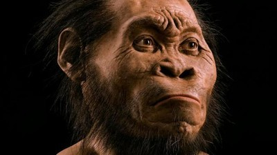 Is Homo Naledi, the New Species of Human, a New Species at All?