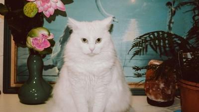 Cum îți dai seama că pisica ta e perversă?