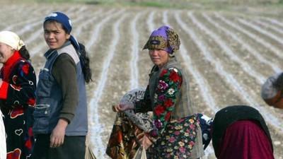 Oezbekistan dwingt 'vrijwilligers' om katoen te plukken