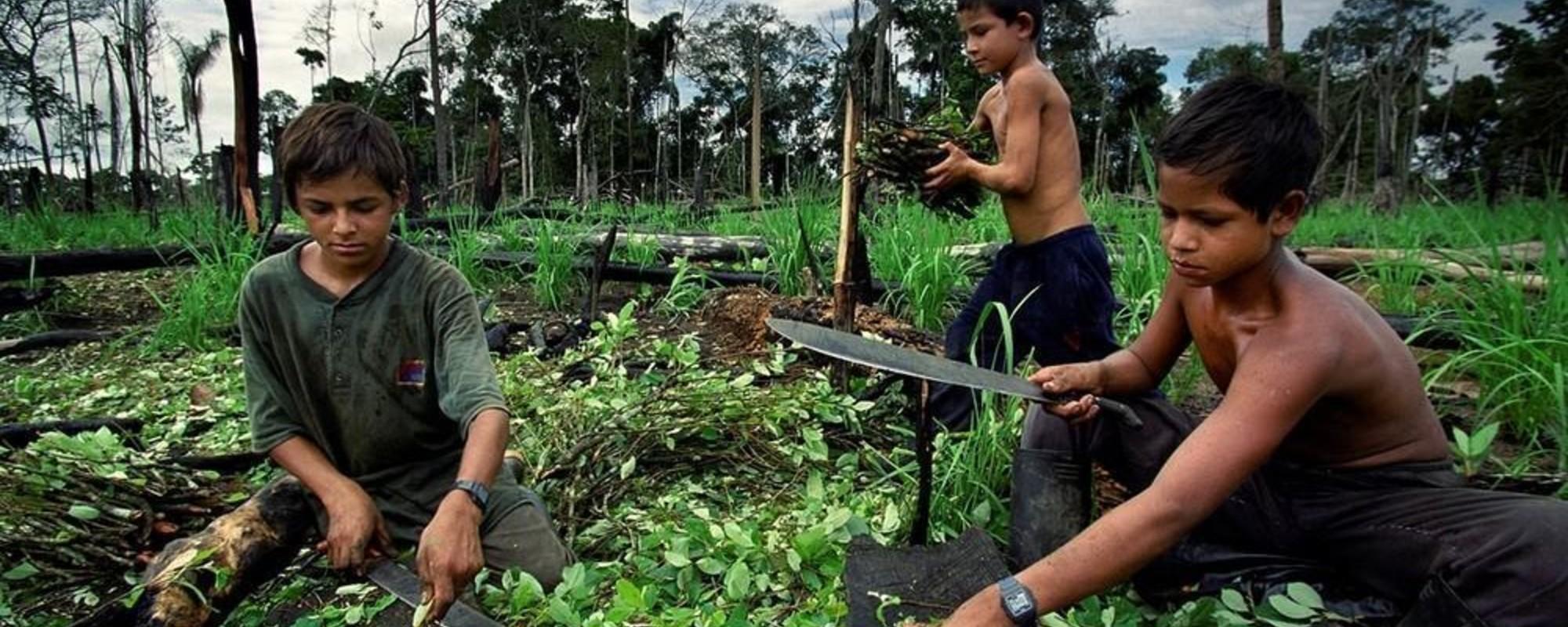 Billeder af kokainens rejse fra Colombia til din næse