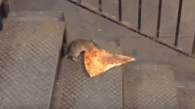 Pizza Rat Is the Only Real New Yorker