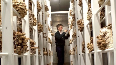 This Urban Mushroom Farm Wants to Start a Biological Revolution