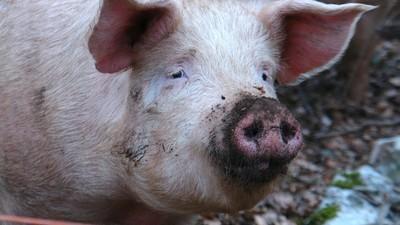 No importa si el primer ministro de Inglaterra se folló o no se folló a un cerdo muerto