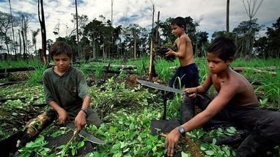 A viagem da coca: dos campos aos narizes de toda a gente