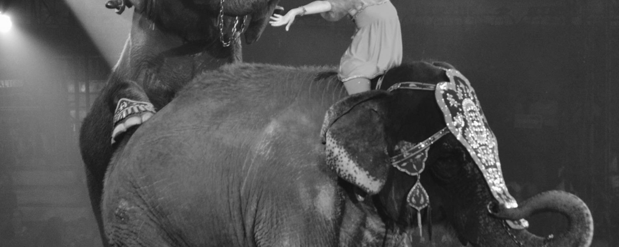 El circo mexicano perdió la grandeza animal