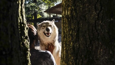 We Hung Out with Wolves in the Florida Panhandle