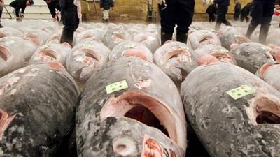 Os cientistas estão muito preocupados com a morte massiva das espécies marinhas