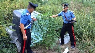 A Bologna i carabinieri hanno scoperto una piantagione di marijuana a due passi dal centro