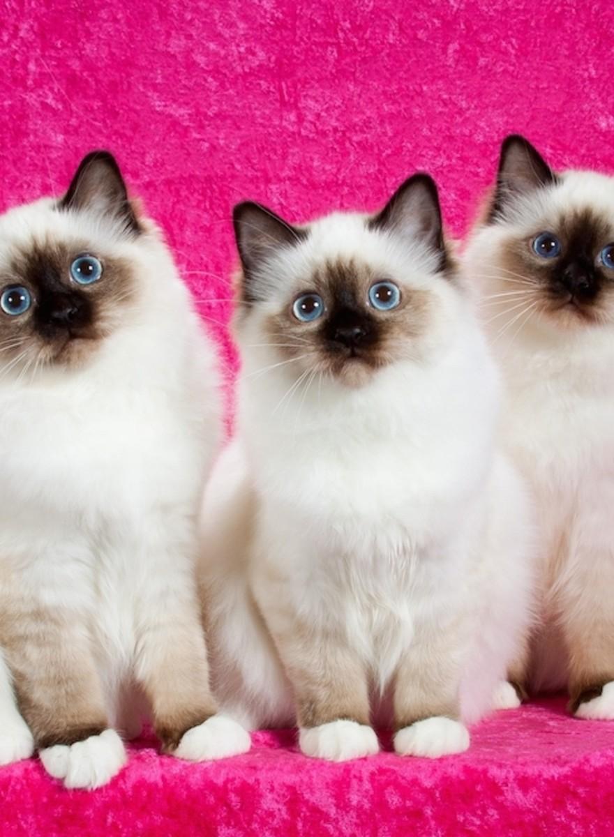 Hablamos con el fotógrafo de gatos más famoso del mundo