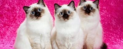 Larry Johnson es el fotógrafo de gatos más famoso del mundo