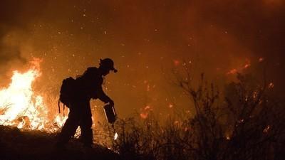 In Kalifornien bekommen Opfer eines Großflächenbrands Gratis-Marihuana