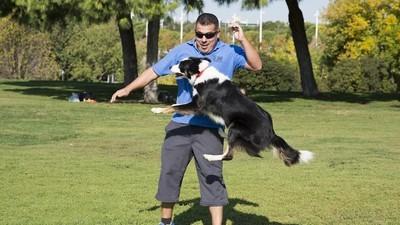 Así es ser entrenador de perros