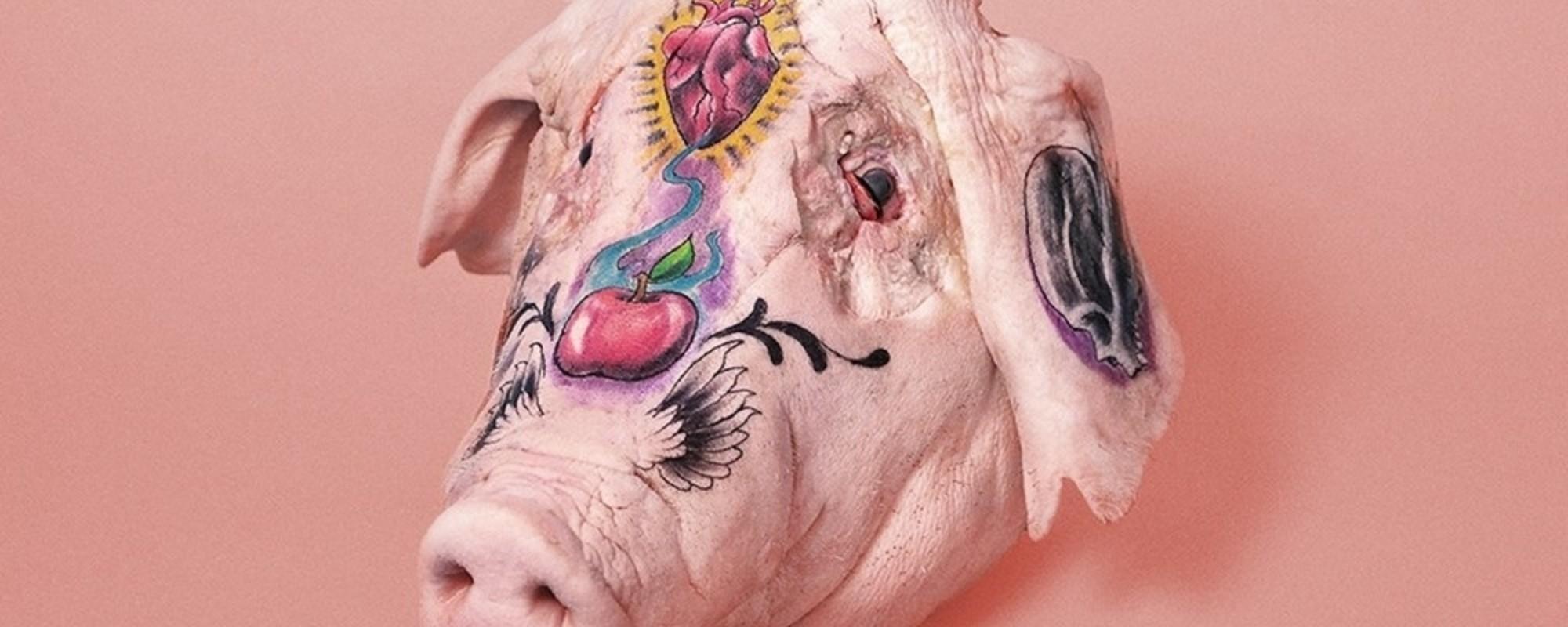 Wenn sich Tätowierer an Schweinsköpfen auslassen dürfen